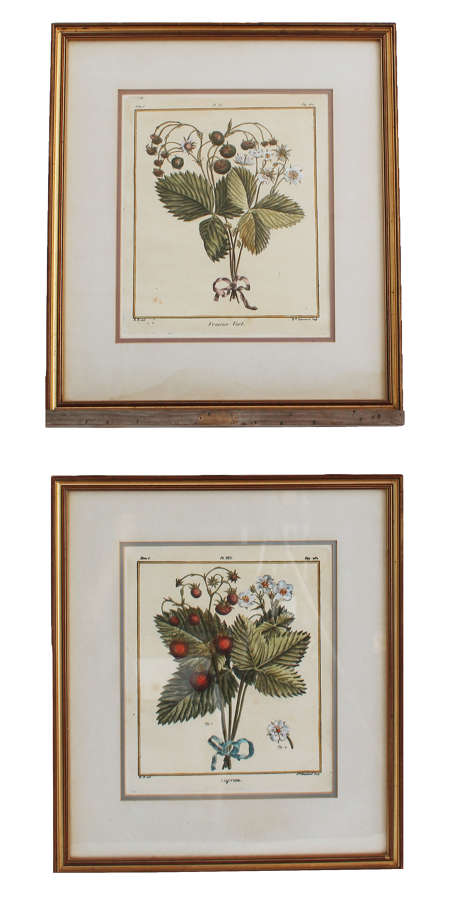 18c Hand-coloured Botanical Engravings