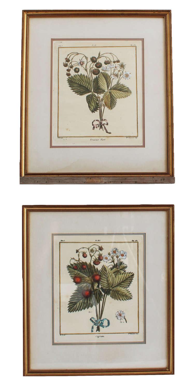 18c Hand-coloured Botanical Engravings