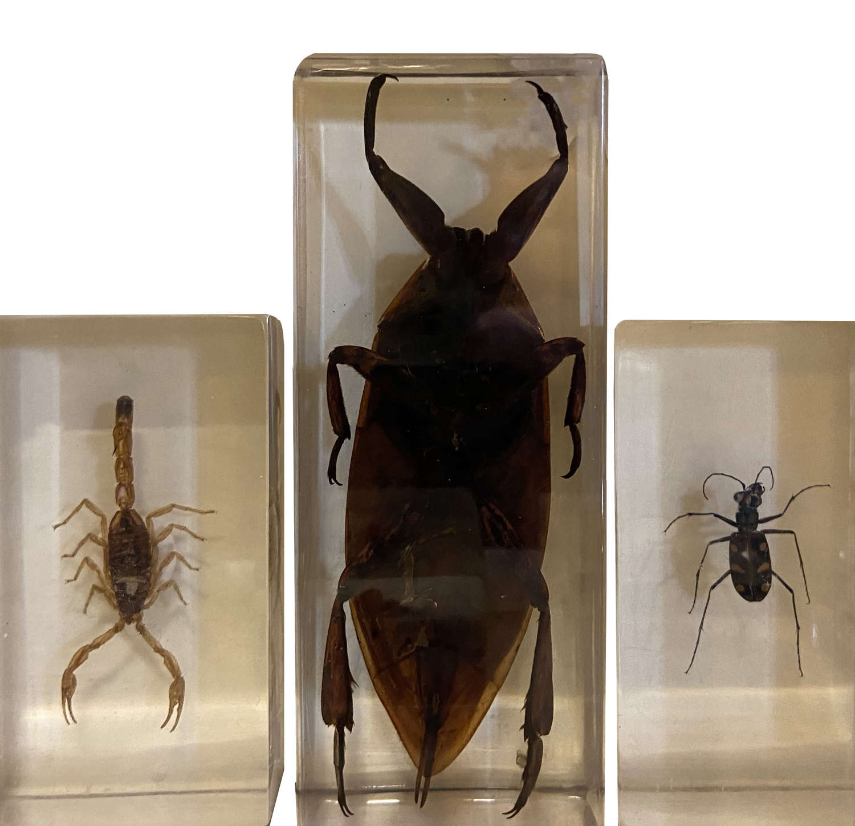 Bugs in Resin